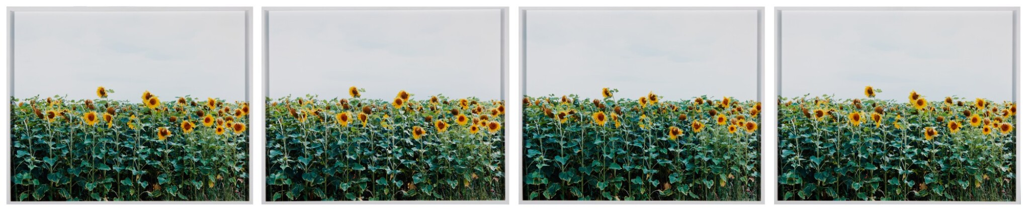 View full screen - View 1 of Lot 51. ANNETTE KELM   UNTITLED.