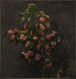 Aubépines roses