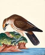 Lewin | The Birds of Great-Britain. 1789-1794, 7 volumes