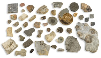 THE BERKELEY COLLECTION OF FOSSILS, ASSEMBLED IN THE 19TH CENTURY