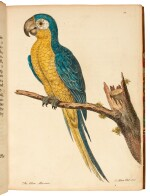 ALBIN | A natural history of birds, 1738-1740 (but later)