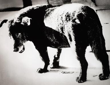 View 1. Thumbnail of Lot 74. DAIDO MORIYAMA | 'STRAY DOG, MISAWA', 1971.