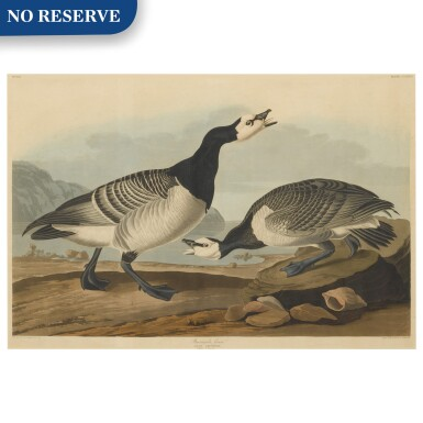 View 1. Thumbnail of Lot 490. Barnacle Goose (Plate CCXCVI).