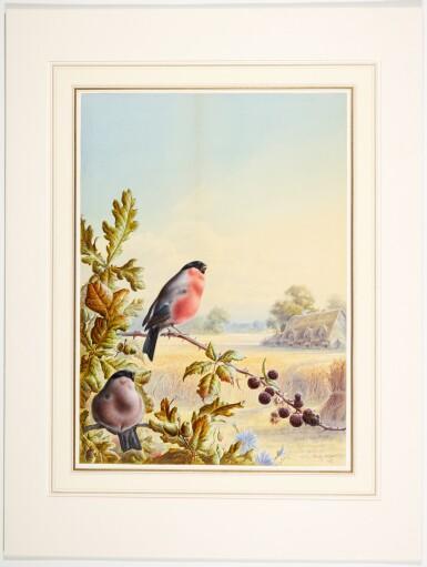 View 4. Thumbnail of Lot 141. Summer - A Pair of Bullfinch; Winter - A Cock Bullfinch and Wren.