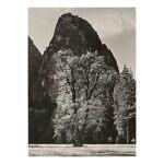 Oak Tree, Autumn, Yosemite Valley, CA