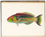 Bennett   Fishes found on the Coast of Ceylon, 1830