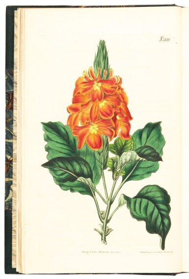 View 2. Thumbnail of Lot 6. Curtis | The Botanical Magazine; or Flower-Garden Displayed, 1815-1848, 42 volumes.