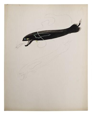 DOLOPICHTHYS PLUMATUS BLACK DRAGON FISH
