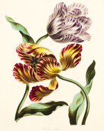 Edwards | A Collection of Flowers drawn from Nature, [1783-1798]