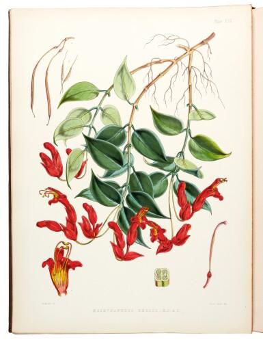 View 2. Thumbnail of Lot 334. Hooker. Illustrations of Himalayan Plants. 1855.