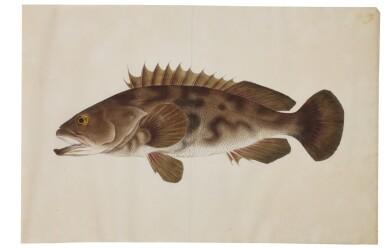 View 9. Thumbnail of Lot 118. ATTRIBUTED TO KAWAHARA KEIGA (1786–1860) STUDIO, EDO PERIOD, 19TH CENTURY, A GROUP OF TWENTY-FOUR FISH.