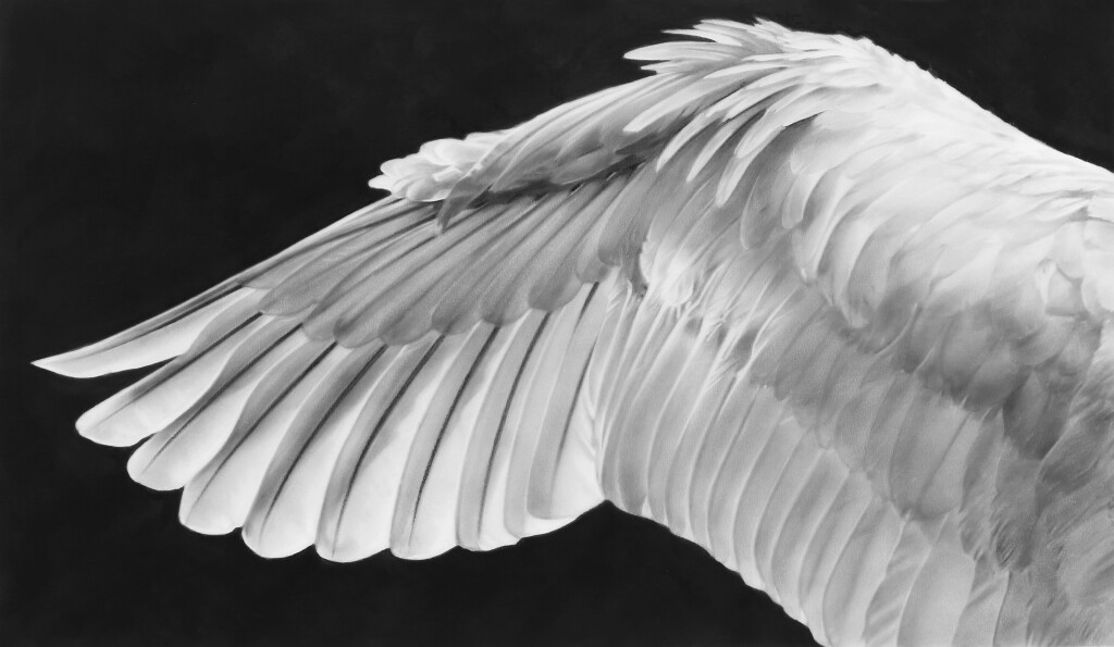 Study of Wing (Flipped)