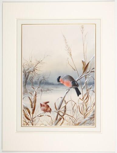 View 5. Thumbnail of Lot 141. Summer - A Pair of Bullfinch; Winter - A Cock Bullfinch and Wren.