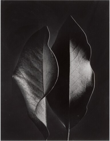 View 1. Thumbnail of Lot 52. RUTH BERNHARD   'TWO LEAVES'.