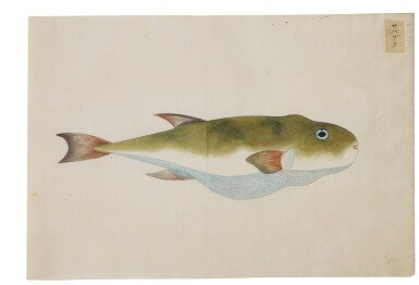 View 19. Thumbnail of Lot 118. ATTRIBUTED TO KAWAHARA KEIGA (1786–1860) STUDIO, EDO PERIOD, 19TH CENTURY, A GROUP OF TWENTY-FOUR FISH.