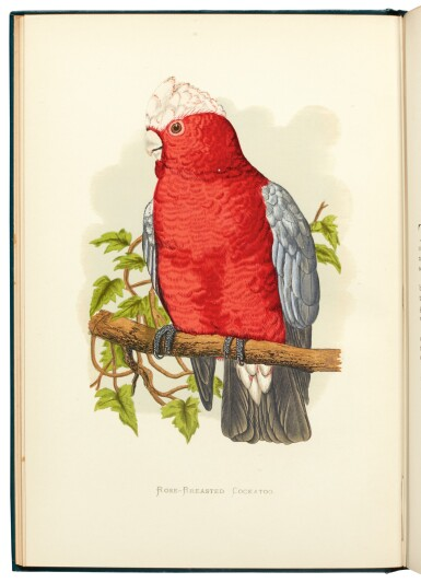 View 3. Thumbnail of Lot 13. Greene | Parrots in Captivity, 1884-1887, [but 1892], 3 volumes.