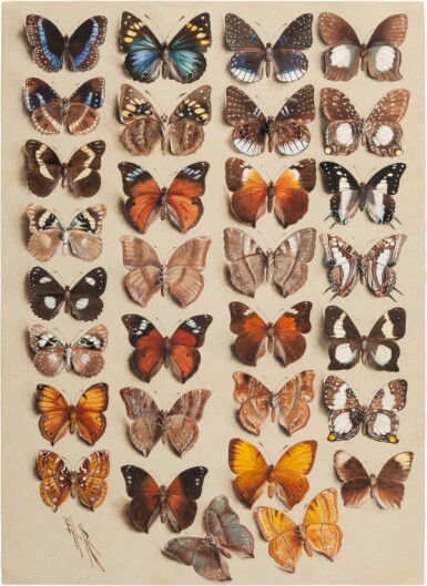 View 4. Thumbnail of Lot 11. Marian Ellis Rowan, 1848-1922 | Two Studies of Butterflies - New Guinea & Australia.