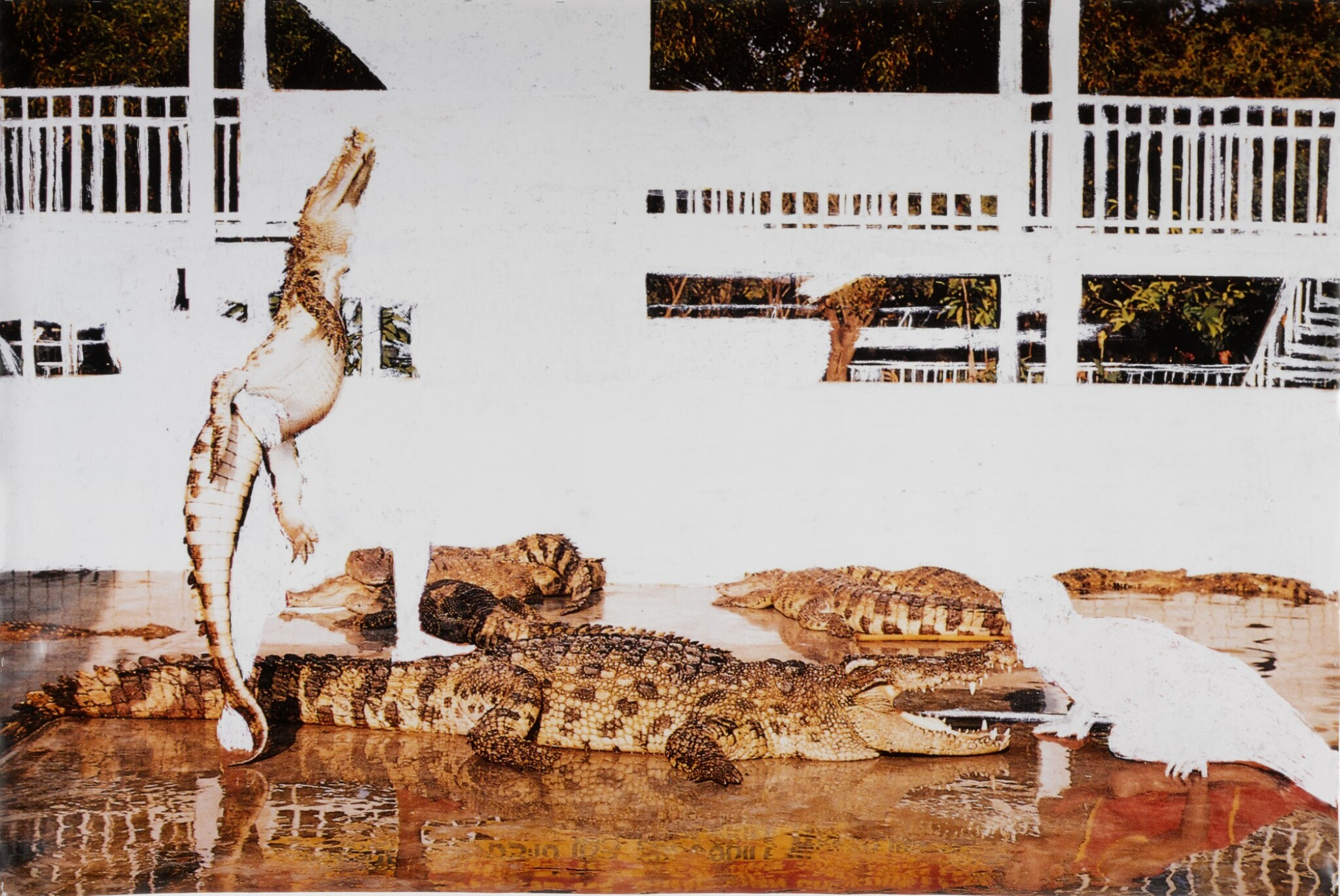 View full screen - View 1 of Lot 25. ANGUS FAIRHURST | CROCODILE WRESTLING (ALL EVIDENCE OF MAN REMOVED).