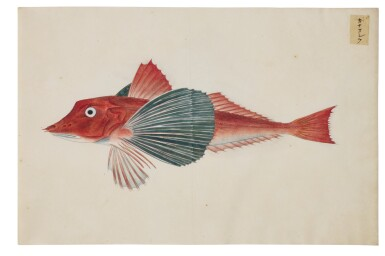 View 6. Thumbnail of Lot 118. ATTRIBUTED TO KAWAHARA KEIGA (1786–1860) STUDIO, EDO PERIOD, 19TH CENTURY, A GROUP OF TWENTY-FOUR FISH.