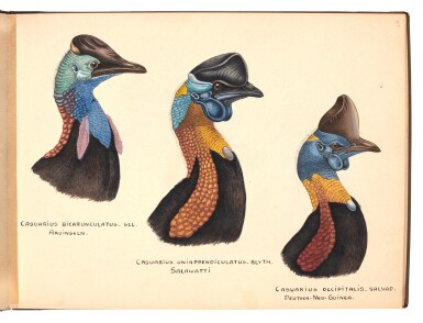 View 2. Thumbnail of Lot 29. Lionel Rothschild and John Keulemans | Album of drawings of cassowaries, together with their printed book on the subject.