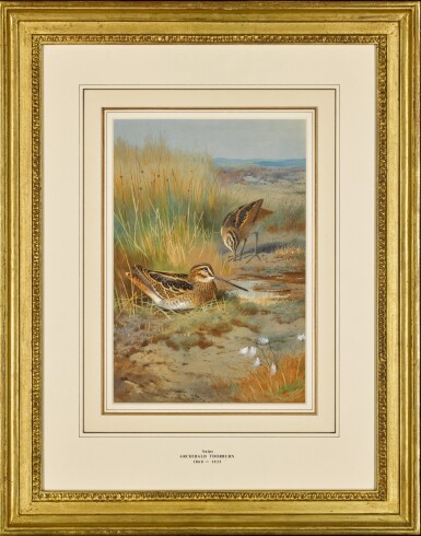 View 2. Thumbnail of Lot 140. A Pair of Snipe (Gallinago Gallinago) .