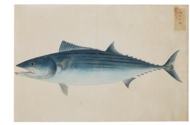 View 21. Thumbnail of Lot 118. ATTRIBUTED TO KAWAHARA KEIGA (1786–1860) STUDIO, EDO PERIOD, 19TH CENTURY, A GROUP OF TWENTY-FOUR FISH.