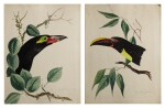 TWO WORKS: TROPICAL BIRDS IN TREES