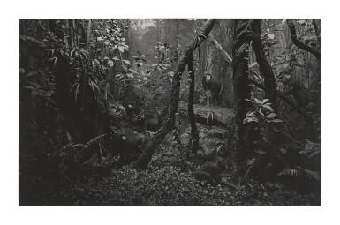 HIROSHI SUGIMOTO | MANDRILL