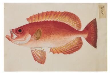 View 25. Thumbnail of Lot 118. ATTRIBUTED TO KAWAHARA KEIGA (1786–1860) STUDIO, EDO PERIOD, 19TH CENTURY, A GROUP OF TWENTY-FOUR FISH.