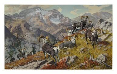 HARRY CURIEUX ADAMSON | CANADIAN GRANDEUR - STONE SHEEP