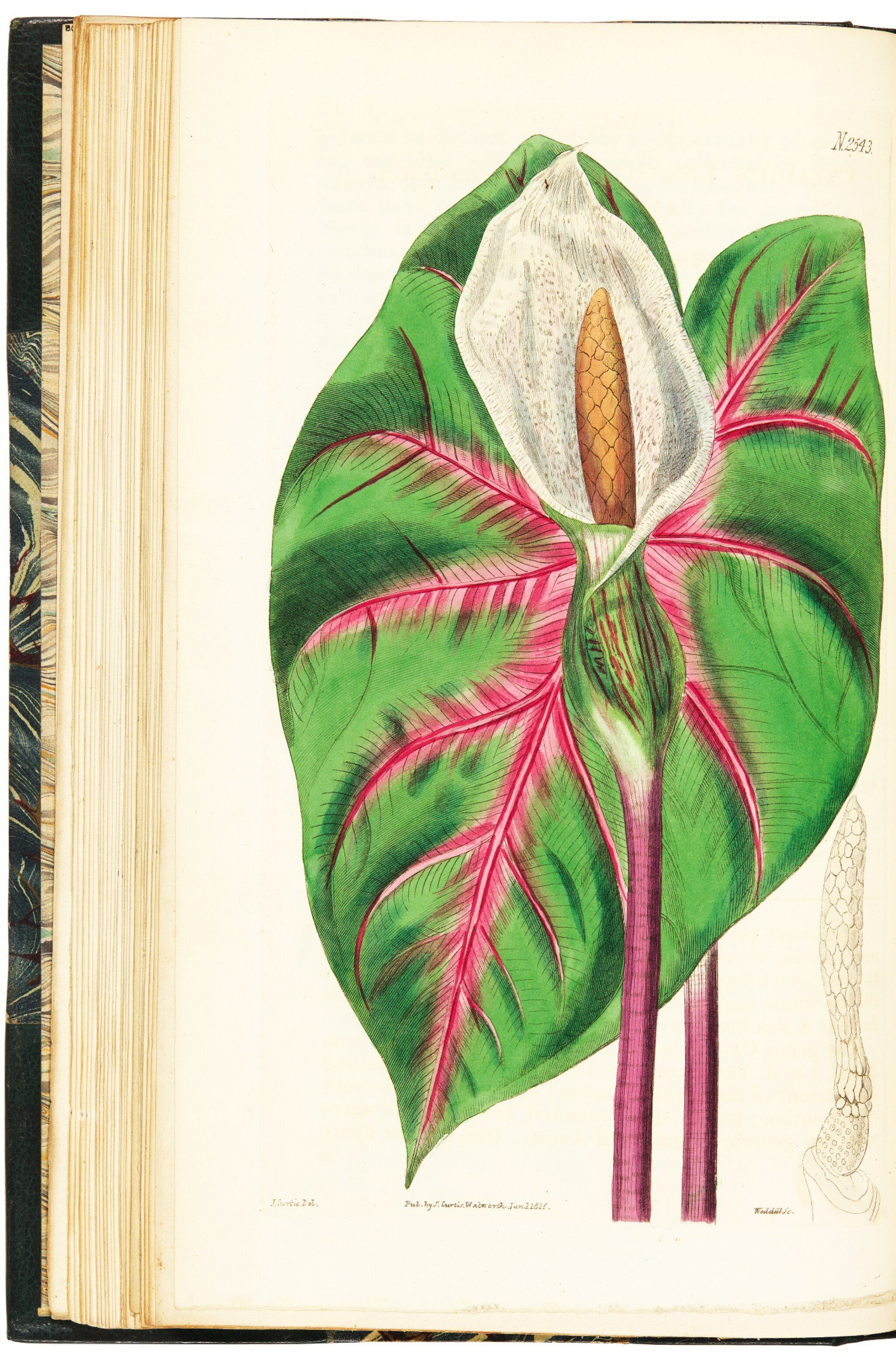 View full screen - View 1 of Lot 6. Curtis | The Botanical Magazine; or Flower-Garden Displayed, 1815-1848, 42 volumes.