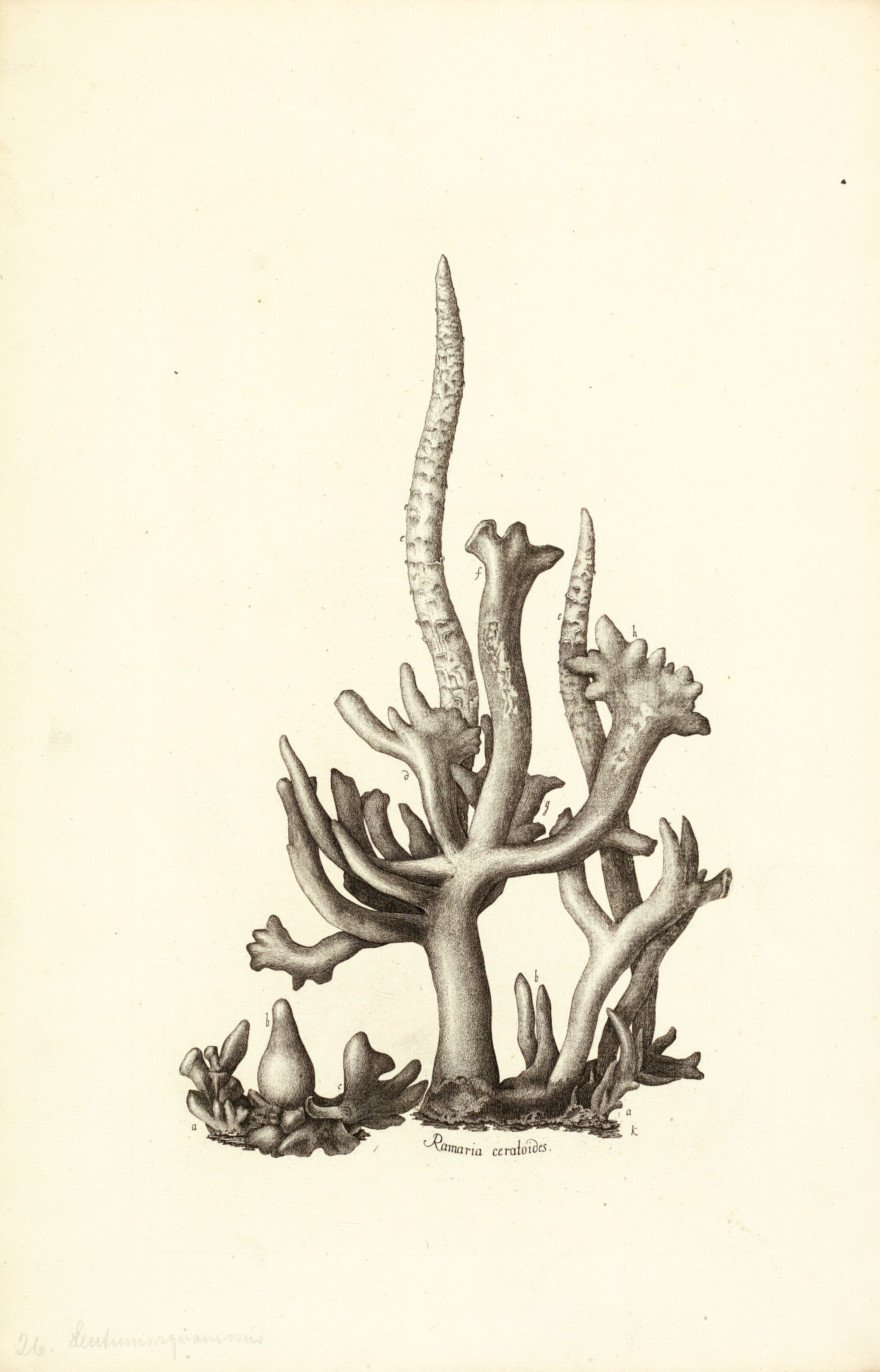 View full screen - View 1 of Lot 16. Holmskjold | Beata ruris fungis Danicis, [1790]-1799.