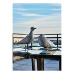Pigeons de Southampton I & II
