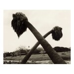 ROBERT ADAMS | 'DEAD PALMS, PARTIALLY UPROOTED, ONTARIO, CALIFORNIA'