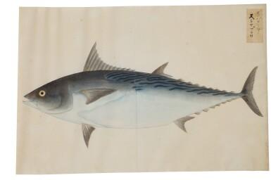 View 10. Thumbnail of Lot 118. ATTRIBUTED TO KAWAHARA KEIGA (1786–1860) STUDIO, EDO PERIOD, 19TH CENTURY, A GROUP OF TWENTY-FOUR FISH.