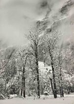 'Trees and Cliffs, Eagle Peak, Winter, Yosemite Valley, CA' (vertical)