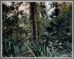 THOMAS STRUTH  |  PARADISE 7, DAINTREE, AUSTRALIA, 1998