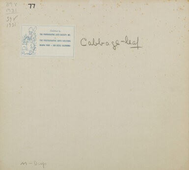 View 3. Thumbnail of Lot 16. 'Cabbage - leaf'.