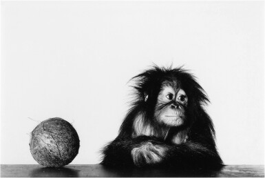View 1. Thumbnail of Lot 12. 'Young Orangutan and Coconut (New York, Oct 12, 2004)'.