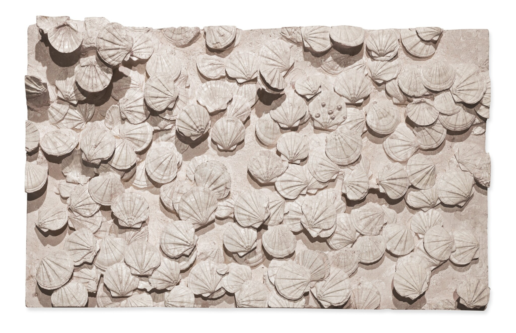 View full screen - View 1 of Lot 141. A LARGE MURAL OF FOSSILIZED SAINT-JACQUES SHELLS..