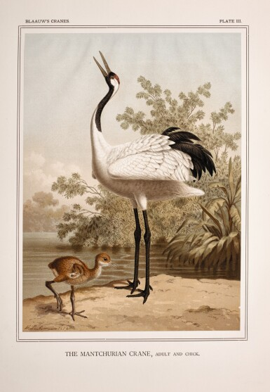 Blaauw | A monograph of the cranes, 1897