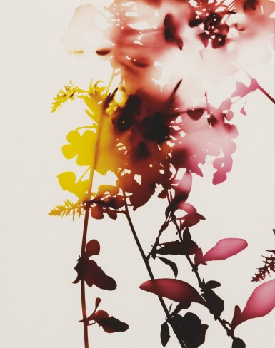 View 1. Thumbnail of Lot 58. JAMES WELLING | SELECTED IMAGES FROM FLOWERS (#005, #008, #009).