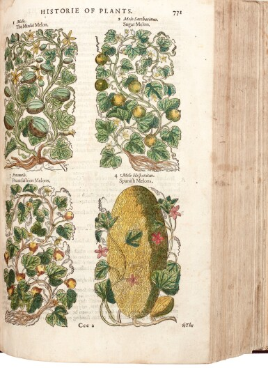 View 1. Thumbnail of Lot 12. Gerard | The Herball or Generall Historie of Plantes, 1597.