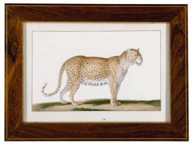 View 2. Thumbnail of Lot 80. A Leopard.