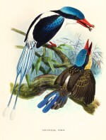Sharpe. A Monograph of the Alcedinidae: or, Family of Kingfishers. 1868-1871. The author's copy.