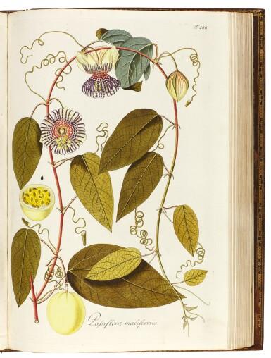 View 6. Thumbnail of Lot 21. Jacquin   Plantarum rariorum Horti Caesarei Schönbrunnensis descriptiones et icones. 1797–1804, 4 volumes.