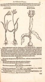 Dodoens | A niewe herball, 1578