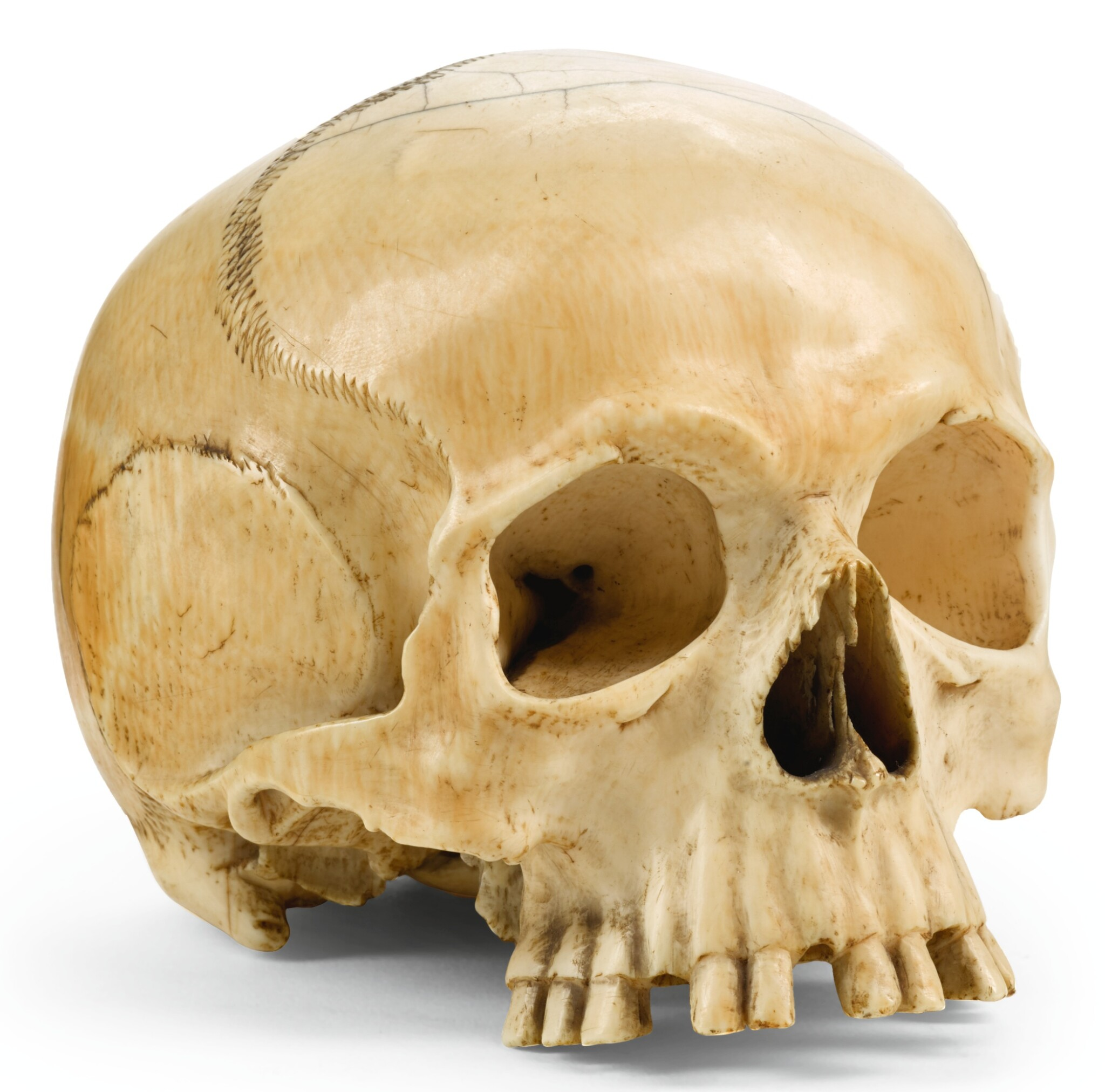 View full screen - View 1 of Lot 153. ENGLISH OR GERMAN, 18TH/ 19TH CENTURY   Skull.