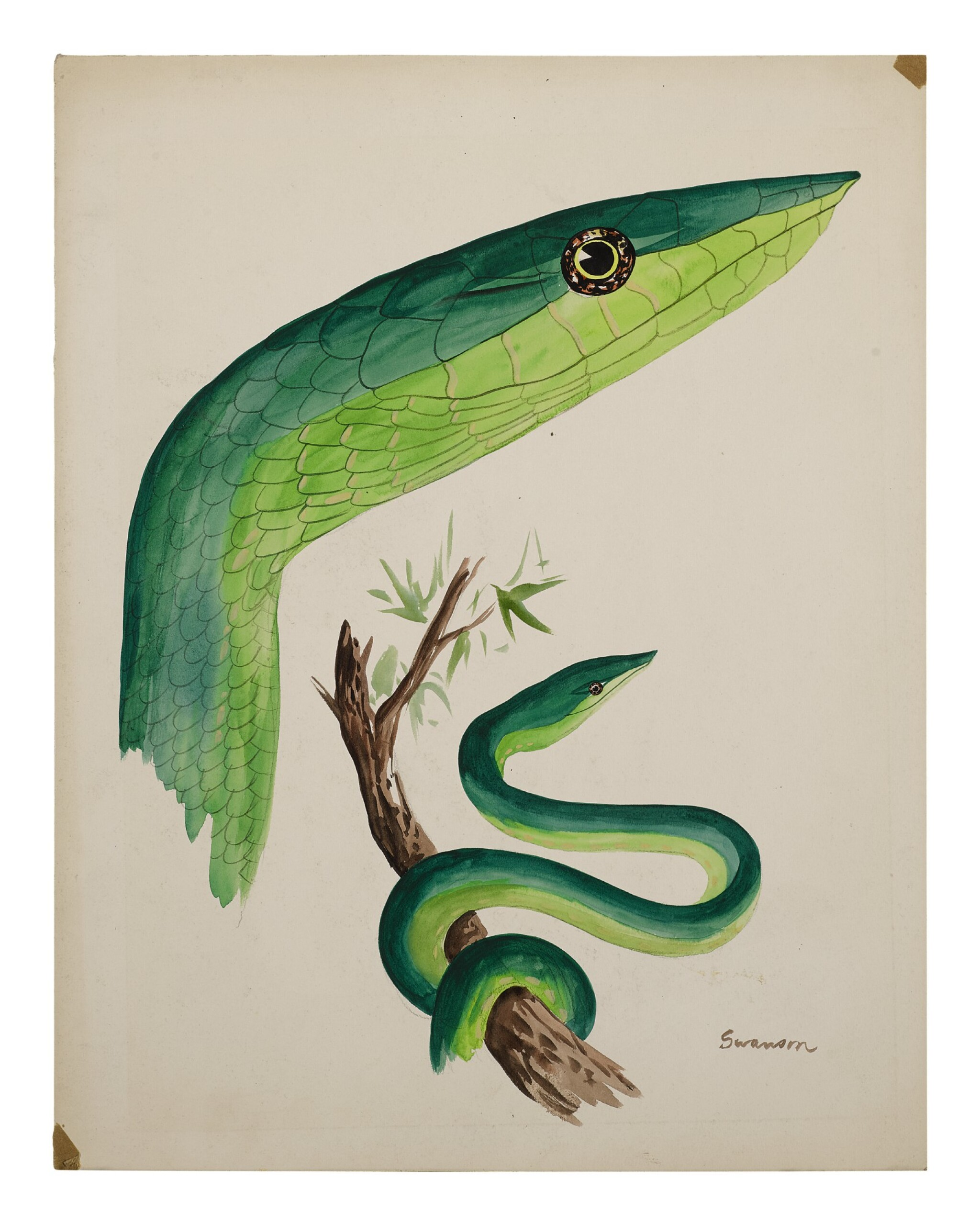 View full screen - View 1 of Lot 1.  GREEN SNAKE.