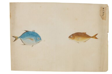 View 2. Thumbnail of Lot 118. ATTRIBUTED TO KAWAHARA KEIGA (1786–1860) STUDIO, EDO PERIOD, 19TH CENTURY, A GROUP OF TWENTY-FOUR FISH.